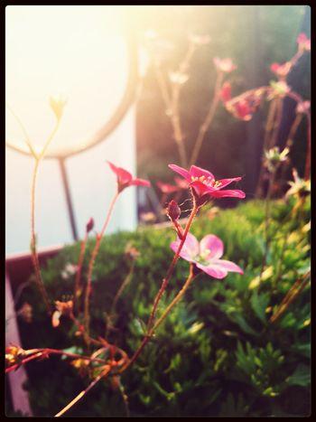 Flower Summer ☀ Summerholidays Sun ☀