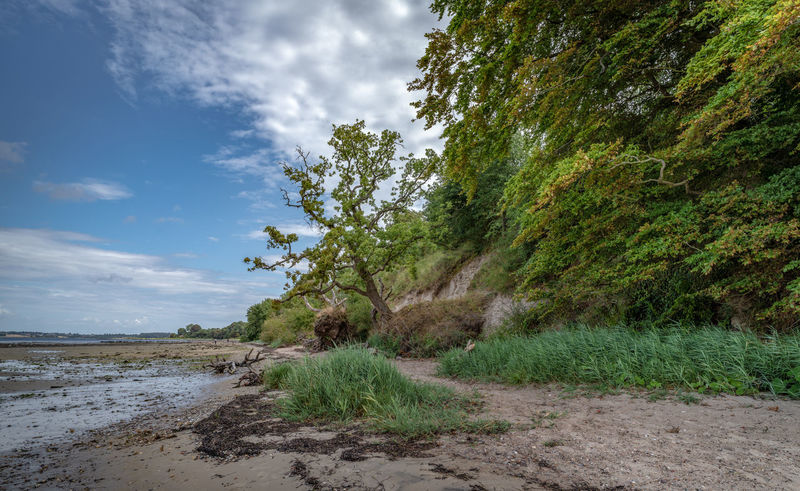 Baltic Sea Coastline Ocean View Beach Beauty In Nature Cloud - Sky Coast Day Grass Green Color Growth Land Nature No People Non-urban Scene Ocean Outdoors Plant Scenics - Nature Sea Sky Tranquil Scene Tranquility Tree Water