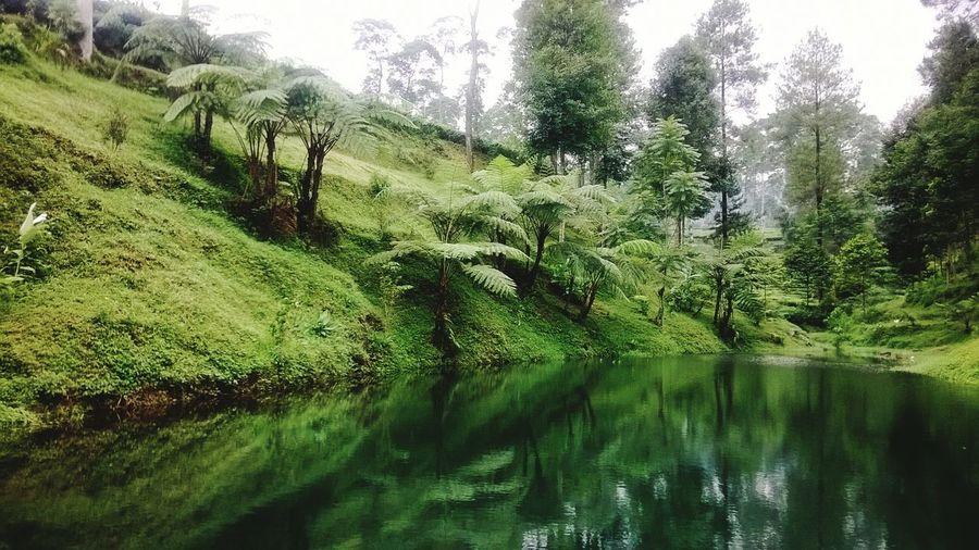 Landscape Tea Plantation