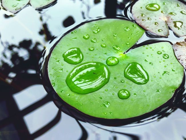 Drop Water Wet Close-up Nature Freshness Green Color