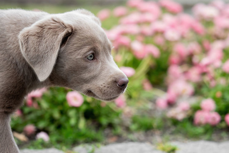 50+ Labrador Retriever Pictures HD | Download Authentic Images on EyeEm