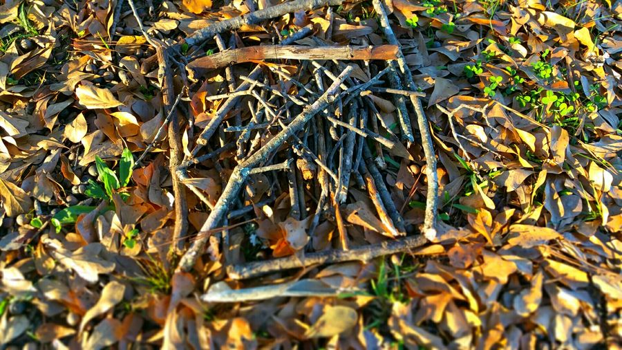 Blairwitch Blairwitchproject Sticks Pattern Nature Outdoor Photography