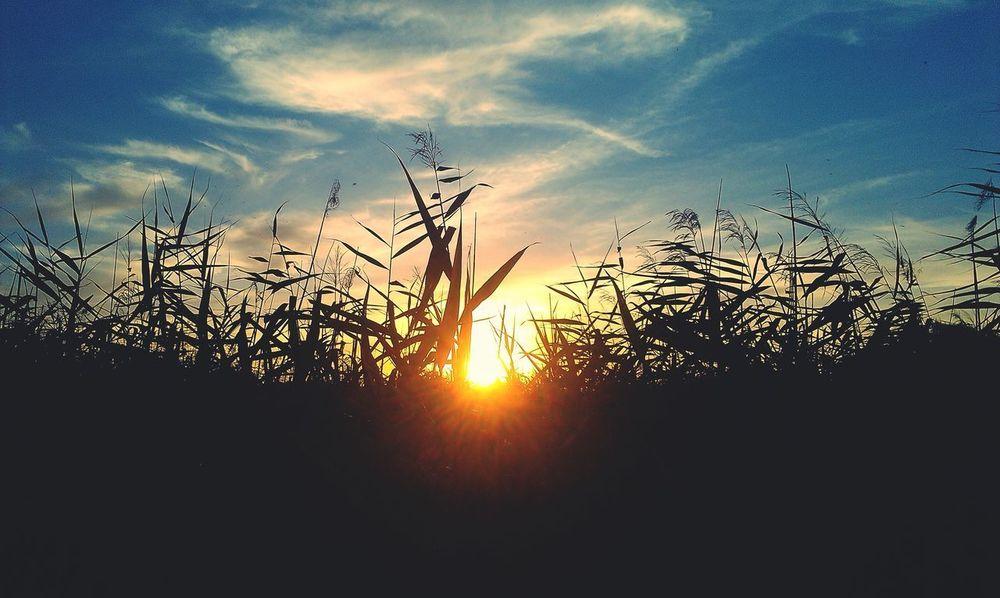 Popular Photos Nature Enjoying Life Sun Set