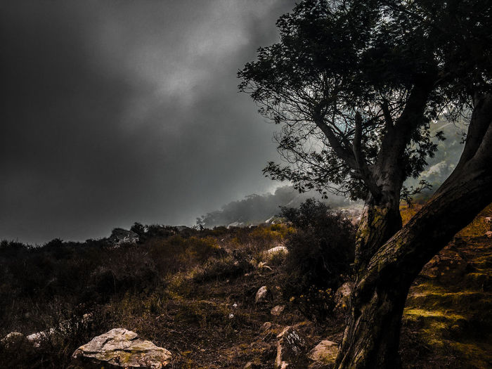 Beauty In Nature Fog Foggy Foggy Morning Forest Landscape Lonliest Place Lonliness Low Angle View Nature Night No People Outdoors Sadness Scenics Sky Tranquil Scene Tranquility Tree Lost In The Landscape