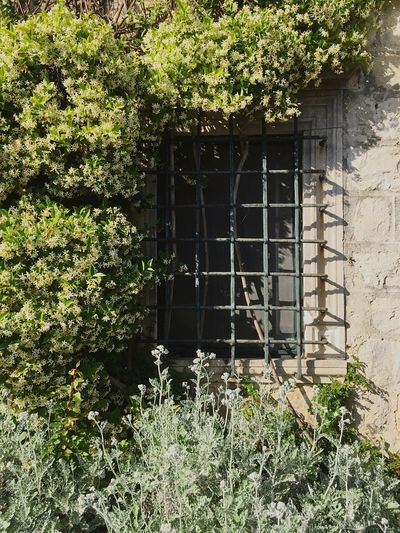 Plant Architecture Built Structure Window Growth Day Building Exterior No People Ivy Green Color Outdoors Nature