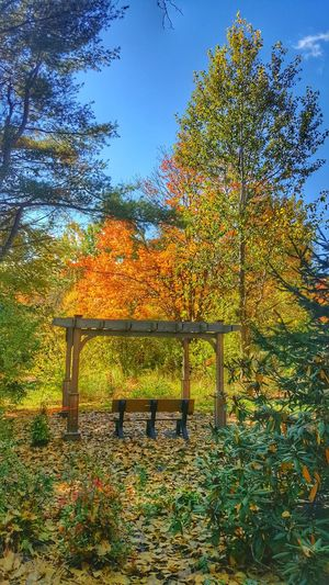 Good Morning! Nature Fall Beauty Fall Colors Autumn Collection Landscape EyeEm Best Shots - Landscape EyeEm Beauty In Nature EyeEm Best Shots Outdoors Tree Growth Sky Nature Day No People Beauty In Nature Autumn Tranquility Clear Sky Freshness