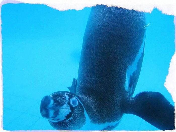 Pingüino Animals Hi! Check This Out Enjoying Life Popular Photos Penguin Turquoise By Motorola Turquoise