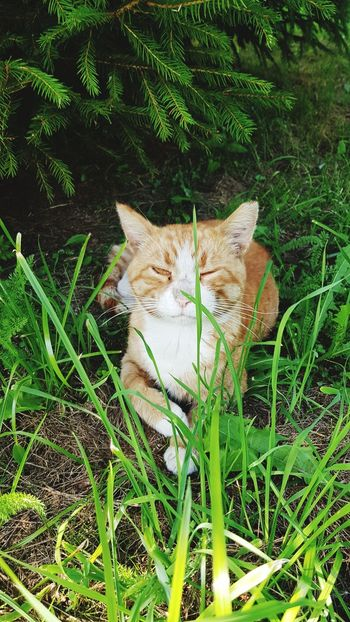 Pet Portraits Animal Themes One Animal Cats Cat Watching Cat Eyes Animals In The Wild Cat Grass Green Color Nature Mammal Growth No People Field Day Outdoors Domestic Animals Plant Close-up