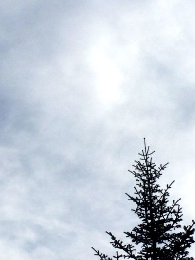 Tree and sky Tree And Sky Tree And Sky