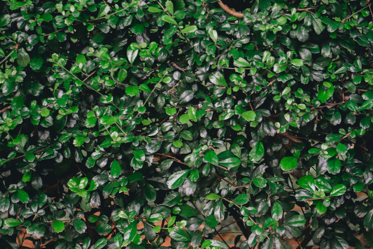 High angle view of ivy growing on field