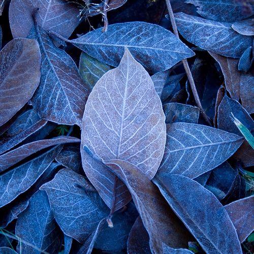 Full frame shot of fallen magnolia leaves