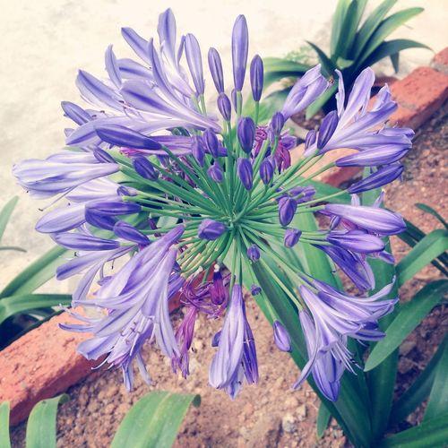Taking Photos Flower