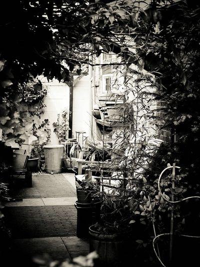 Bücher  Breedevoort Netherlands Netherland Netherlands ❤ Town Of Books Bücherstadt Books Gardens Garden Blackandwhite Blackandwhite Photography Black And White Photography Black And White Black & White Black&white Black And White Collection