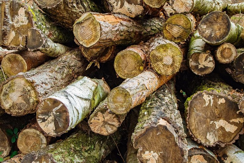 Full Frame Backgrounds Large Group Of Objects No People Day Nature Abundance Timber Stack Outdoors Log Pattern Deforestation Close-up Textured  Forest Lumber Industry Woods WoodLand Firewood Fossil Fuel Wood Environmental Damage Fallen Tree Dead Tree Tree Stump Tree Trunk Pile Tree Ring Branch