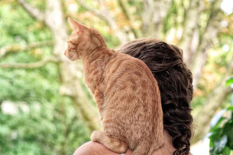 little red tigered European Shorthair Cat likes to sit on Shoulder Kater Kitty Red Shoulder Sitting Woman Cat Domestic Domestic Animals Domestic Cat European Shorthair Europäisch Kurzhaar Feline Getigert Ginger Cat Katze Kitten Look Male Mammal One Animal Pets Pussycat Sit Tigered