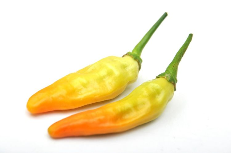Bird's Eye Chili Pepper Chili  Little Chili Hot Spicy Spice Pedas Cabe Cabe Rawit Chili Pepper