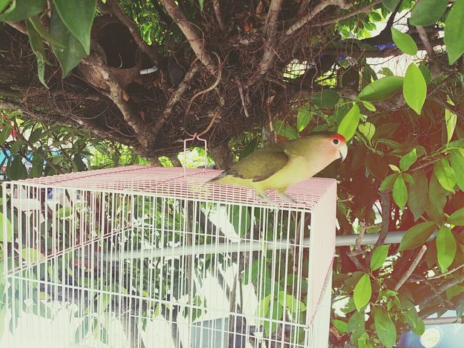 Nature Birdie Pets Animals Birds Birds Of EyeEm  Bird Photography