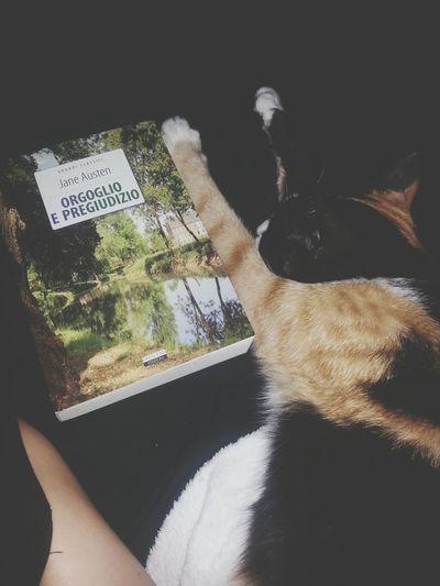 Made By Me My Cat Jane Austen Pride And Prejudice Orgoglio E Pregiudizio Il Mio Gatto