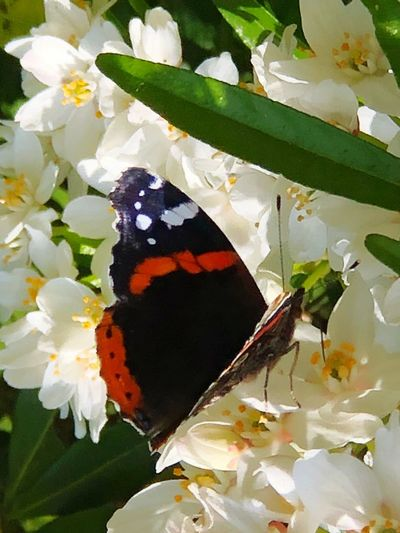 Butterfly 🦋 Flowers 🌸🌸🌸 Butterfly💓 Leaf Plant Part Beauty In Nature Flower Plant Butterfly - Insect Insect Close-up Invertebrate One Animal Animal Wildlife Nature Animal Themes No People Animals In The Wild Animal Flowering Plant Growth Fragility Animal Wing
