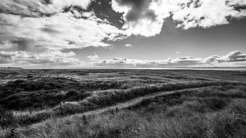Beauty In Nature Blackandwhite Blackandwhite Photography Cloud - Sky Clouds Contrast Day Filter Grass Growth Idyllic Island Landscape Langeoog Nature No People Outdoors Rural Scene Scenics Seascape Sky Tranquil Scene Tranquility