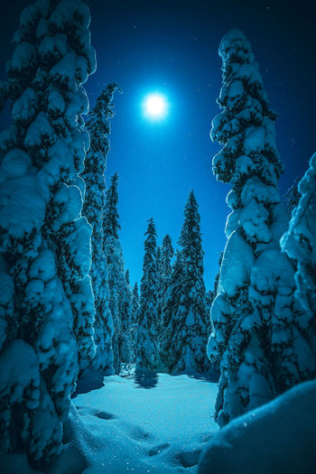 Snow covered trees against blue sky at night