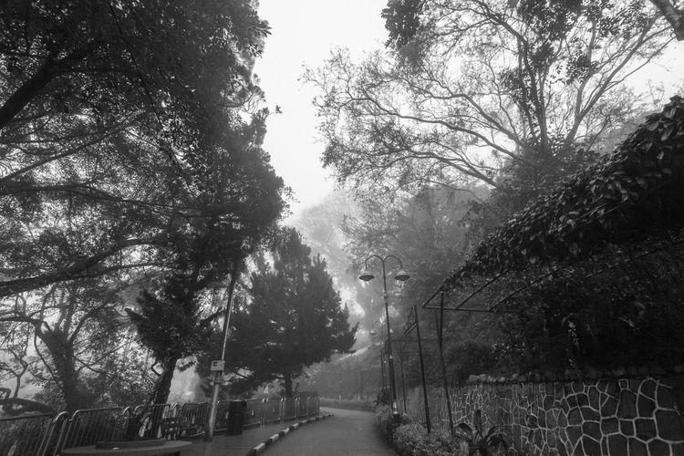 Foggy misty road indicating haunted in Penang Hill Tree Plant Direction The Way Forward Nature No People Growth Day Outdoors Footpath Penang Penang Malaysia Penang Island
