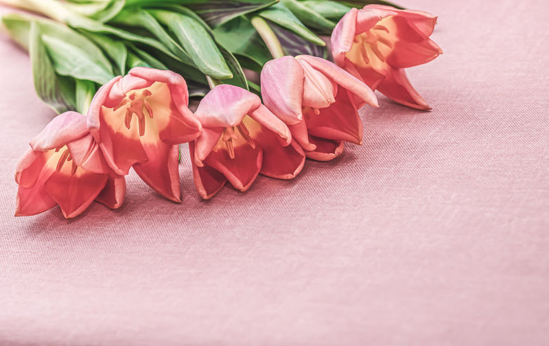 Close-up of pink roses on table