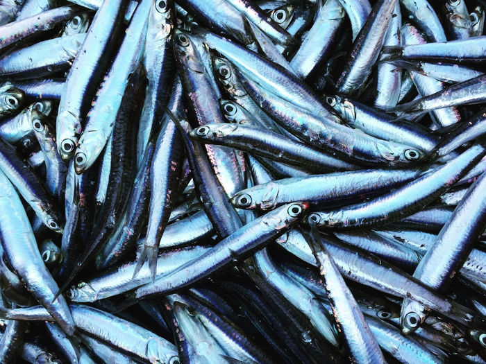 Fresh sardines and anchovies on market top view close up Above Anchovies Animal Themes Catch Close Up Close-up Dead Animal Fish Food Fresh Healthy Many Market Mediterranean  Raw Retail  Sale Sardines Seafood Seafood Top View