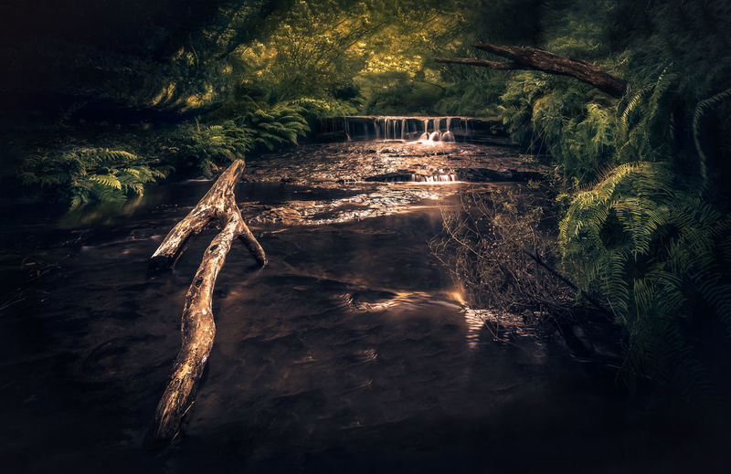 EyeEm Selects No People Illuminated Outdoors Tree Water Creek Fairytale  Forest Waterfall Motion Nature Hiking Landscape Beauty In Nature Nature Photography National Park Green Ferns
