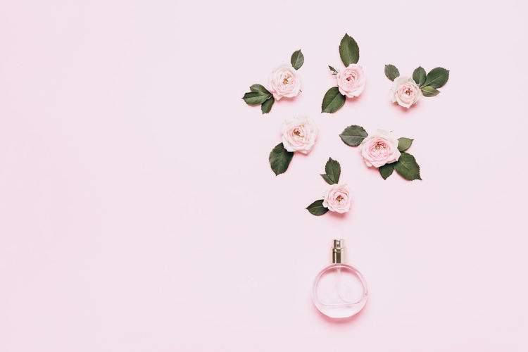 Close-up of pink flowers on table against white background