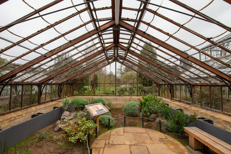Cambridge Cambridgeshire University City Botanical Gardens Climate Control Glass House Glass Roof Green House Natural Light Wooden Frame Greenhouse Plant Growth Architecture Day Built Structure Indoors  Nature No People Abandoned Roof Glass - Material Plant Nursery Obsolete Ceiling Broken Tree Decline Green Color Deterioration Ruined