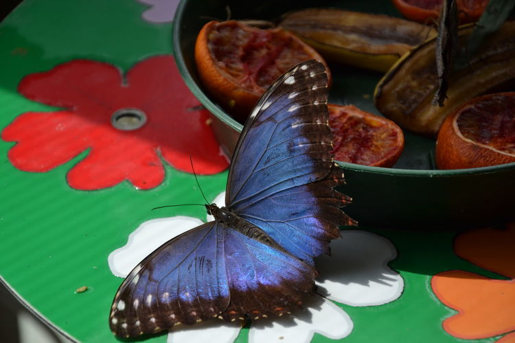 High angle view of butterfly on plate