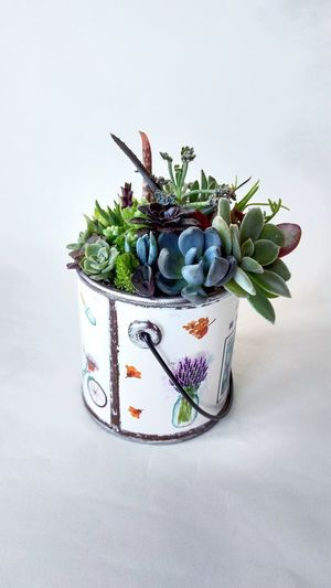 No People Indoors  Day Freshness Beauty Terrarium Succulents Cactus Close-up Herb Nature Indoors  White White Background Studio Shot Provence Proveyouaregreen Beauty In Nature Floristics Decoration Plant Potted Plant Nature Bouquet Indoors