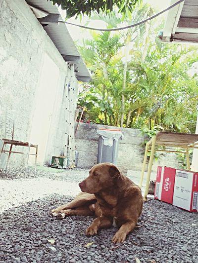 I Love My Dog Kenji 😋 Supermodel