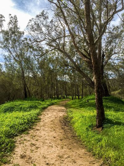 Peaceful Path in the Woods Pathway Path Trail Sandy Hiking Walking Nature Woods Connected With Nature Trees Sky Outdoors Swan Valley  Western Australia Australia Landscape Peaceful Tranquil Tree Trunks Lush Green Forest Walking Meditation