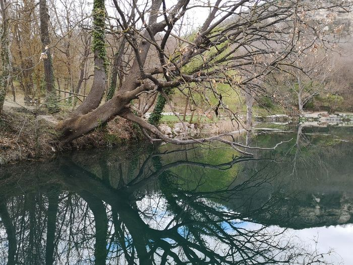 Sinizzo Tree Plant Tranquility Forest Water Branch Beauty In Nature Bare Tree Nature Scenics - Nature Land No People Day Trunk Tree Trunk Tranquil Scene Non-urban Scene Growth Lake Outdoors WoodLand