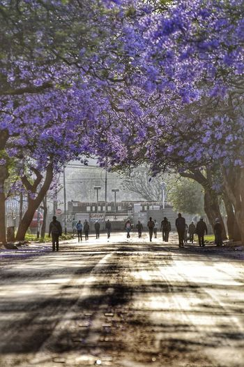 People on flower tree in city