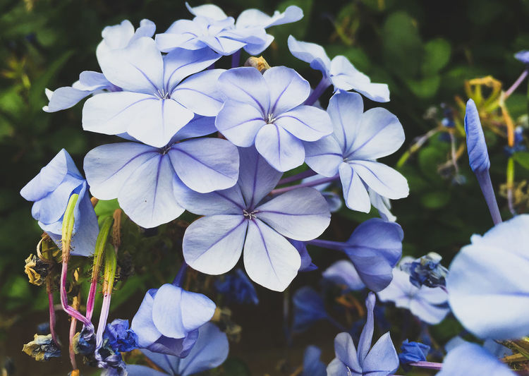 Floral beauty Beauty In Nature Bloom Blooming Botany Bunch Of Flowers Close-up Flower Flower Collection Flower Collection Eye Em Nature Lover Growing Growth Hydrangea Naturelovers Petal Plants And Flowers Purple