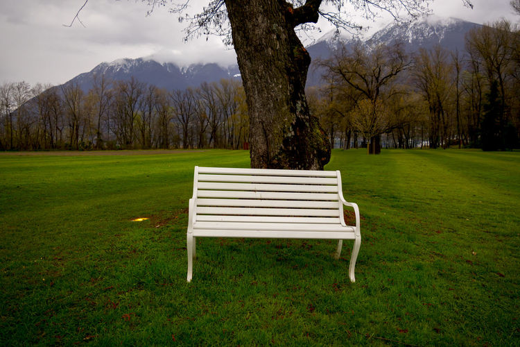 Bench in the Nature Bench Field Grass Green Color Nature Tranquility Tree Tree Trunk Bare Tree Beauty Beauty In Nature Branch Color Landscape Leaning Mountain No People One Object Outdoors Swiss Alps Tranquil Scene White Color