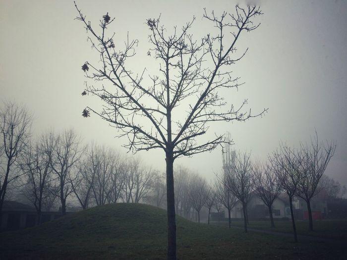 Fog in