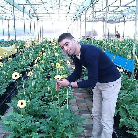 Gerbera Production Flowers Azemour Morocco