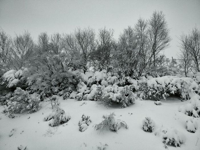 Nevada. Inverno Galiza Neve Snow O Cebreiro Landscape