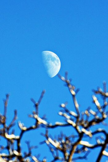 Sky Clear Sky Moon Low Angle View Blue No People Beauty In Nature Copy Space Astronomy Branch Nature Day Space Half Moon Planetary Moon Tranquility Outdoors Winter