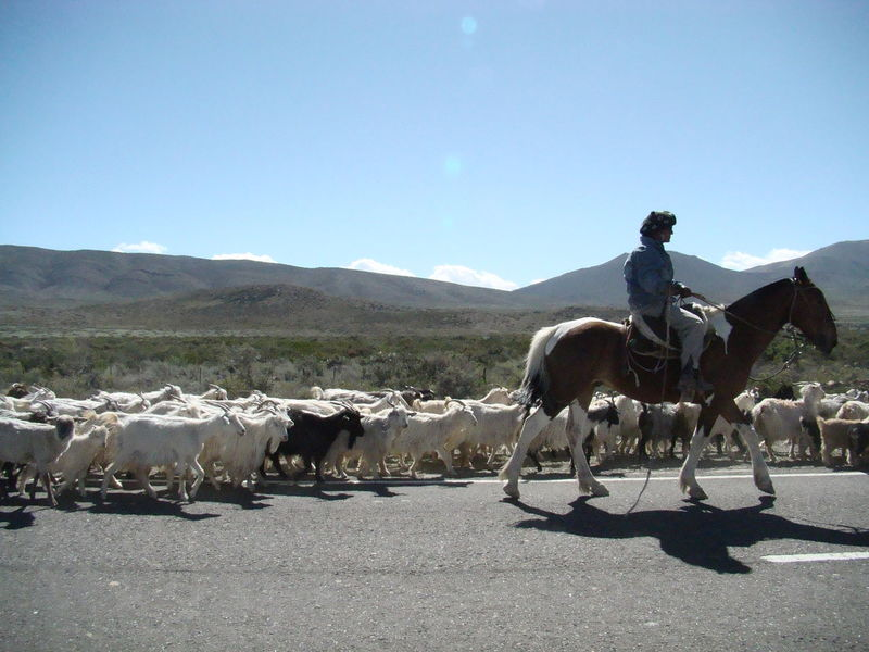 Animal Themes Day Gaucho Gaucho Argentino Goats Horse Outdoors Working Animal EyeEmNewHere