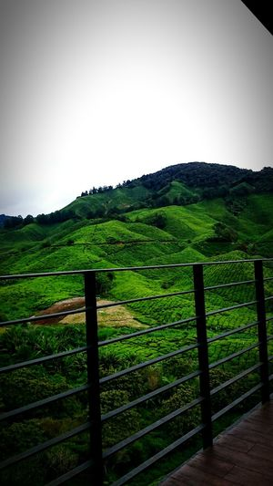 Cameronhighland Cameron Highlands Malaysia Green Beautiful Nature