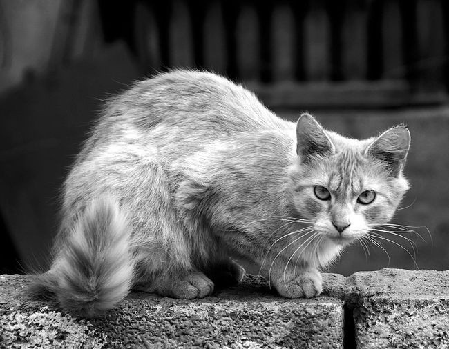 Animal Themes Cat Lovers Black And White Photography