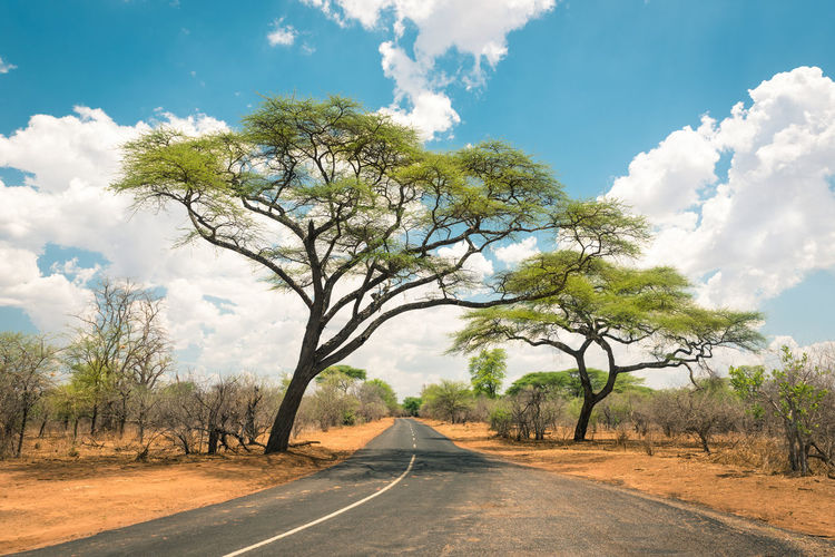 Acacia trees in african landscape Acacia Acacia Tree African Botswana Clear Sky Hwange National Park Nairobi Nature Road Travel Tree Wanderlust Zimbabwe Adventure Africa African Beauty Landscape No People On The Road Park Safari Safari Park Scenics Sky Travel Destinations
