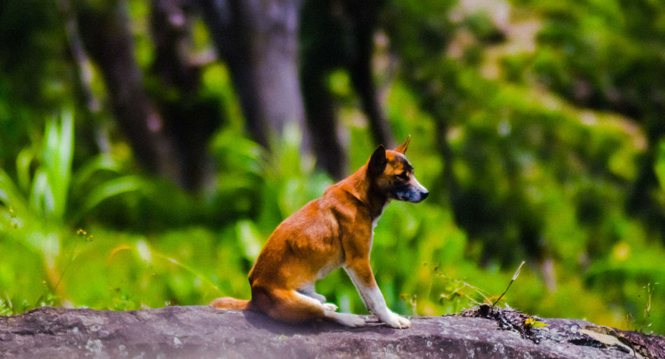 View of a dog on land