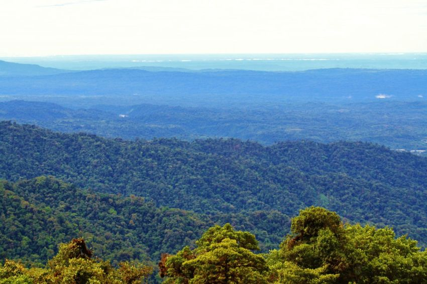 Arboleda Arboles Ecuador♥ Forest Landscape Paisaje Selva Vegetacion