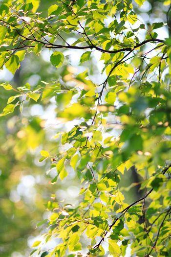 Leaves Summer Leaves Leaves🌿 Summertime The Essence Of Summer